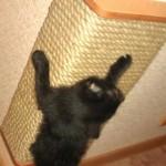 Точилка для когтей кошек