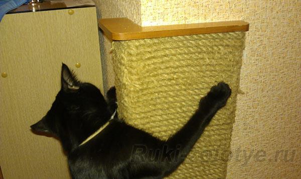 Как сделать чесалку для котов